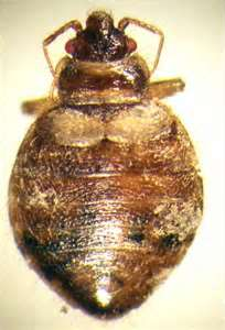 stockton bed bugs