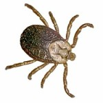 stockton ticks